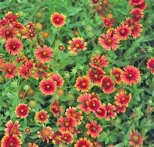 All Seasons Landscape - Plant Database